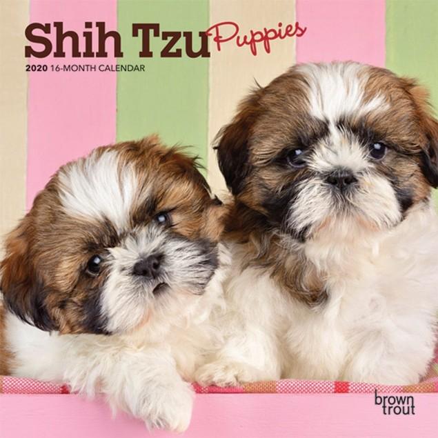 Shih Tzu Puppies Mini Calendar, Shih Tzu by Calendars
