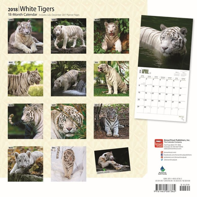 White Tigers Wall Calendar, Big Cats by Calendars