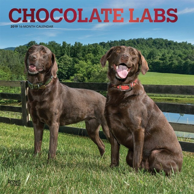 Lab Retriever Chocolate Wall Calendar, Chocolate Lab by Calendars