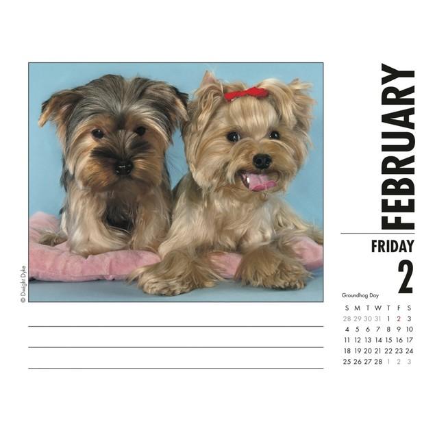 Just Yorkies Desk Calendar, Yorkshire Terrier by Calendars
