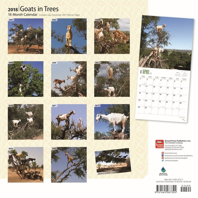Goats in Trees Wall Calendar, Farm Animals by Calendars
