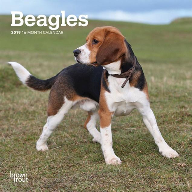 Beagle Mini Wall Calendar, Beagle by Calendars