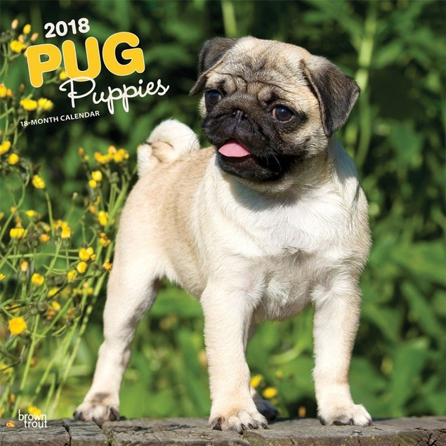 Pug Puppies Wall Calendar, Pug by Calendars