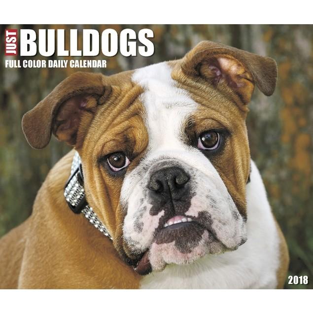 Bulldogs Desk Calendar, Bulldog by Calendars