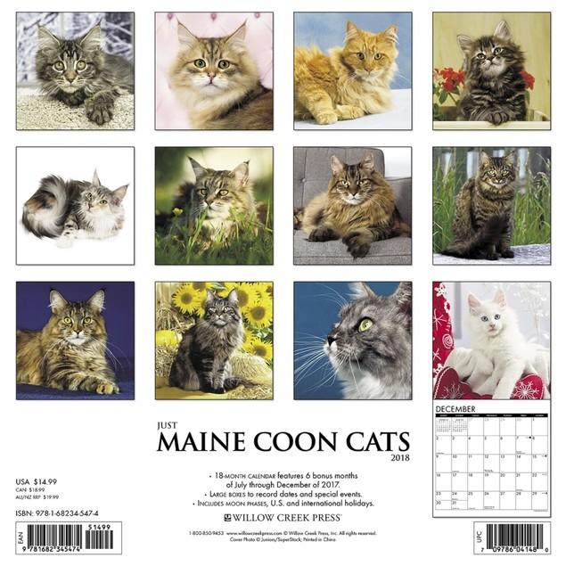 Maine Coon Cats Wall Calendar, Cat Breeds by Calendars