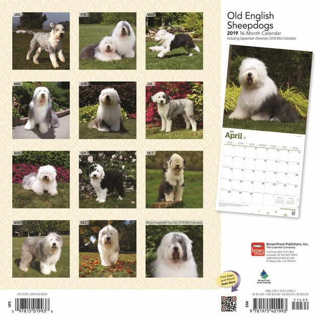 Old English Sheepdogs Wall Calendar, Old English Sheepdog by Calendars