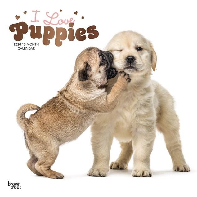 Puppies Wall Calendar, Cute Puppies by Calendars