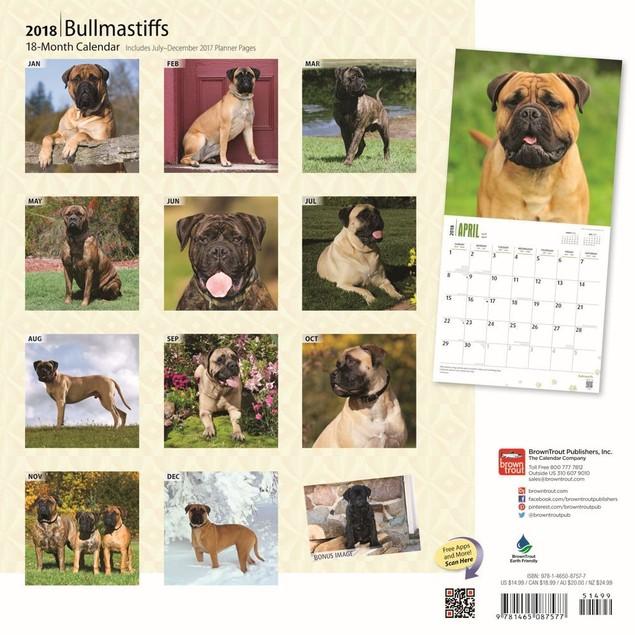 Bullmastiffs Wall Calendar, Bullmastiff by Calendars