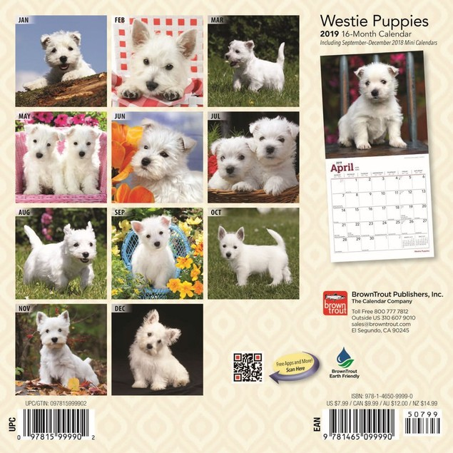 West Highland Terrier Puppies Mini Wall Calendar, West Highland Terrier by
