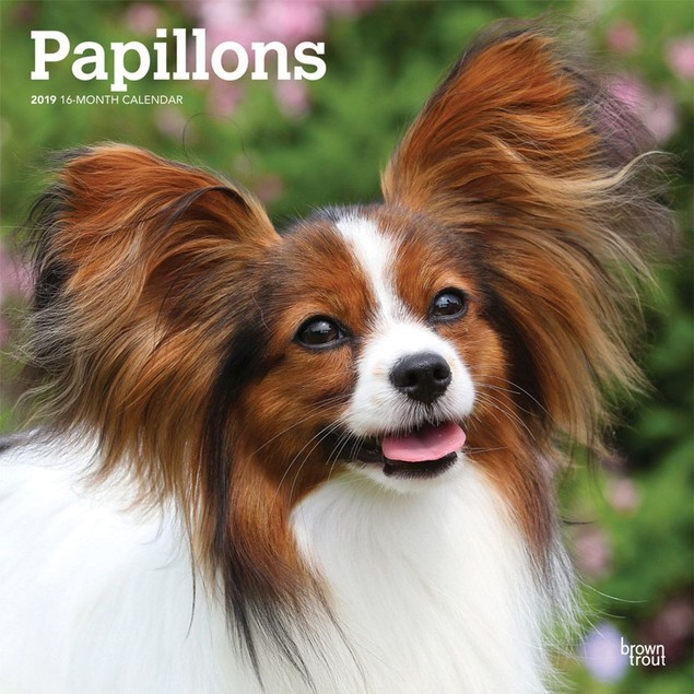 Papillons Wall Calendar, Papillon by Calendars