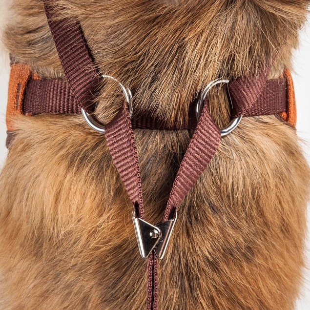 Pet Life Luxe 'Pawsh' 2-In-1 Adjustable Dog Harness-Leash W/ Fashion Bowtie