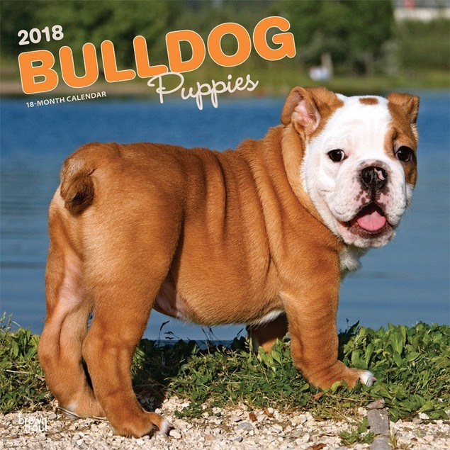 Bulldog Puppies Wall Calendar, Bulldog by Calendars