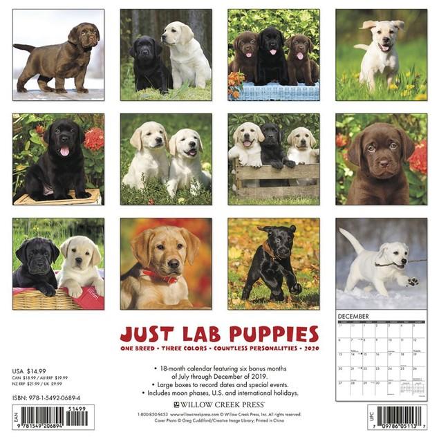 Lab Puppies Just Wall Calendar, Labrador Retriever by Calendars