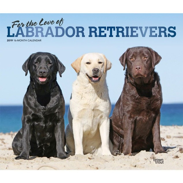 Lab Retriever Wall Calendar, Labrador Retriever by Calendars