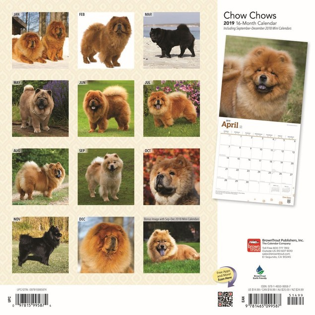 Chow Chows Wall Calendar, Chow Chow by BrownTrout