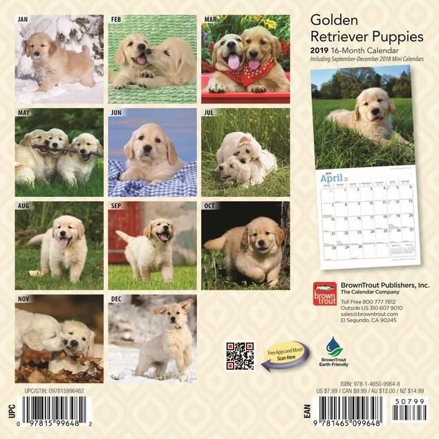 Golden Retriever Puppies Mini Calendar, Golden Retriever by Calendars