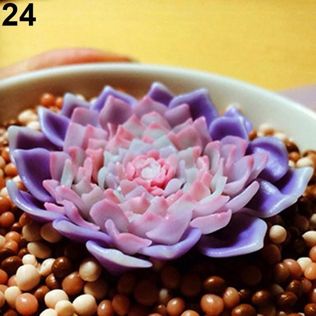 80pcs Rare Succulent Process Seeds Organic Plants Flower Office
