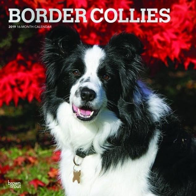 Border Collies Wall Calendar, Border Collie by Calendars