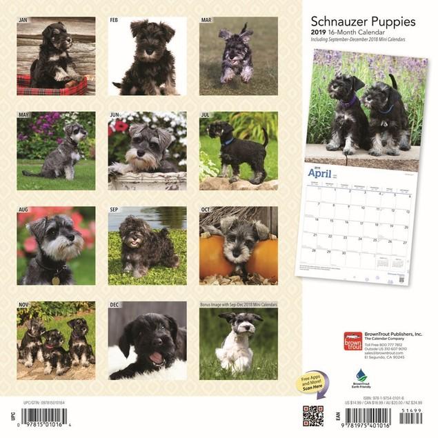 Schnauzer Puppies Wall Calendar, Schnauzer by Calendars
