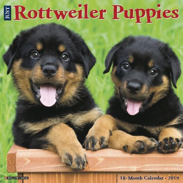 Just Rottweiler Puppies Wall Calendar, Rottweiler by Calendars