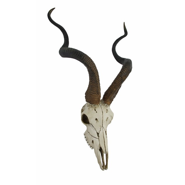 African Kudu Antelope Skull Wall Hanging Cool Wall Sculptures