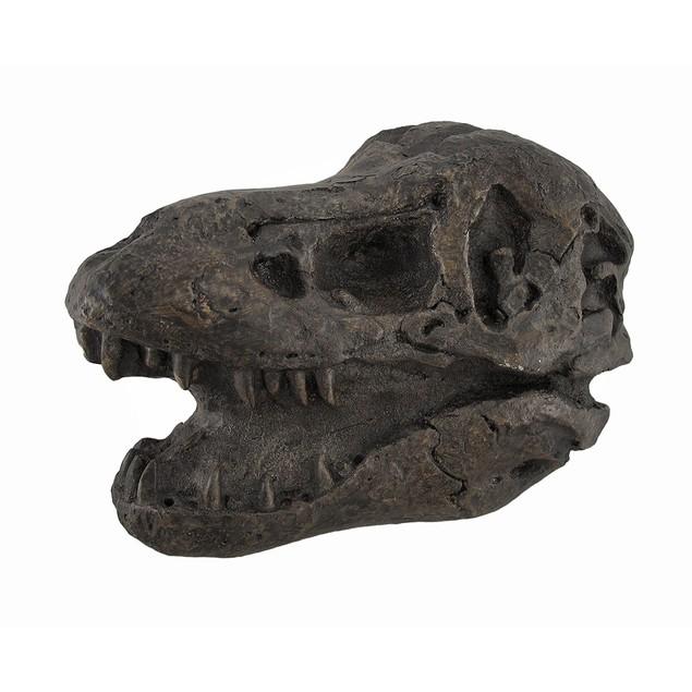 T-Rex Tyrannosaurus Rex Fossil Skull Statue Cast Statues