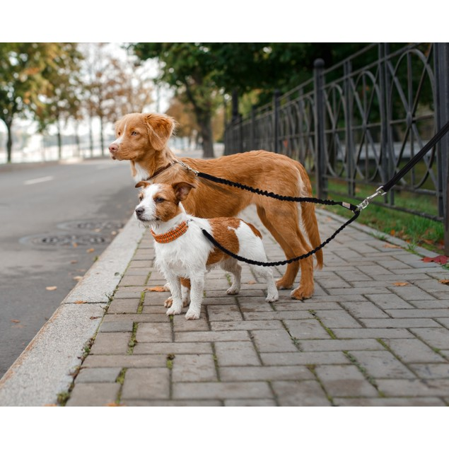 Waloo Pets Double Dog Bungee Dog Leash