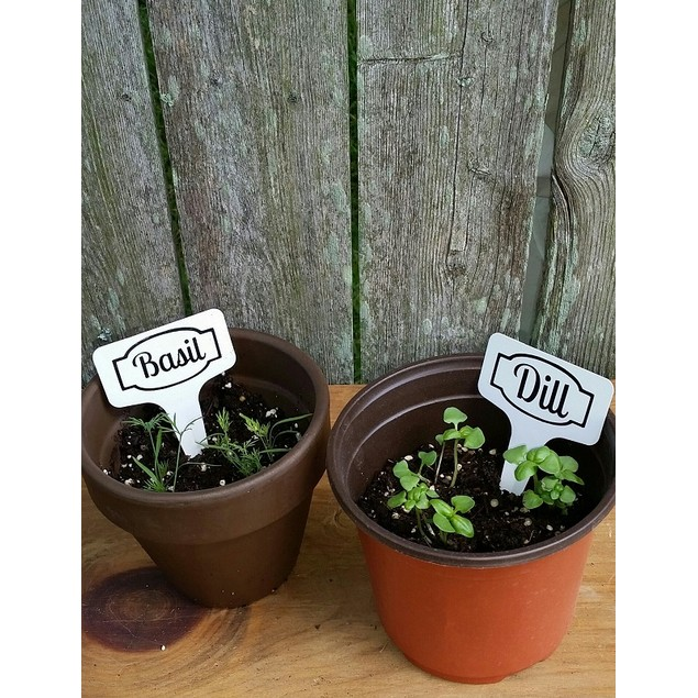 Personalized Plant Picks Set of Four