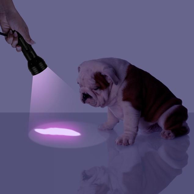51-LED Ultraviolet Black-Light